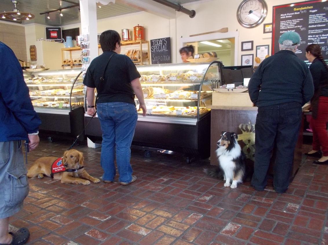 4 Testing Psychiatric Service Dog Partners