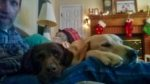 Boyce and Bear and Bama as Xmas couch potatoes